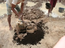 Mixing the soil extracts with cow dung.