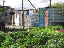 The Nyanga People's Garden Center dispenses seedlings to settlement gardeners, Cape Flats, Cape Town, South Africa.
