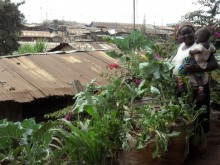 Settlement micro-farmer with sack gardens overlooking Kibera informal settlement, Nairobi, Kenya.